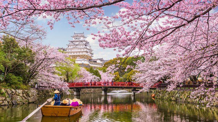 Il viaggio perfetto per seguire la fioritura dei ciliegi in Giappone