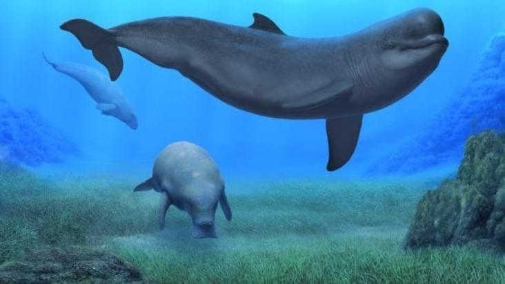 Il ritrovamento di un fossile ci illumina sulla storia del territorio maremmano