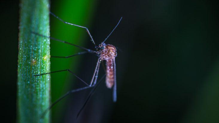 Come disinfestare il giardino dalle zanzare