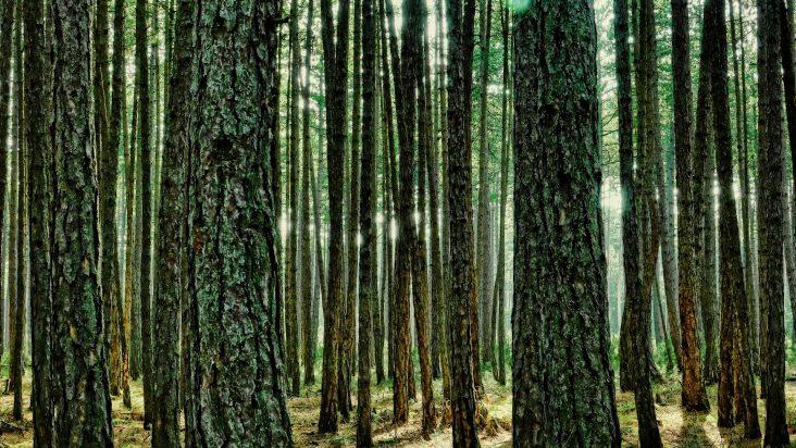 Online il sito informativo italiano sulla terapia forestale