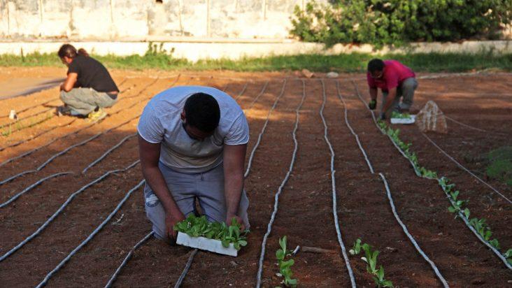 Il progetto degli orti comunitari a Lampedusa